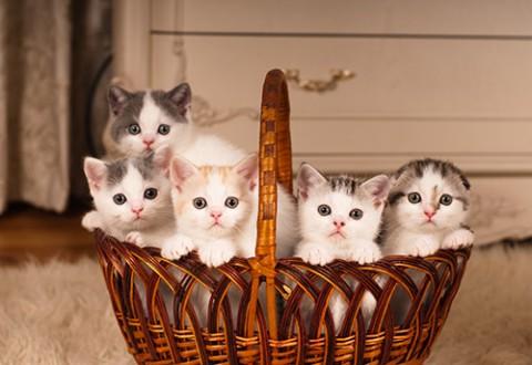 kittens-in-basket.jpg