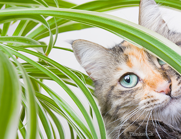 why-do-cats-eat-plants-and-should-i-be-worried-1-120686262